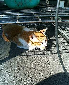 青山には仲のいい猫がいる9