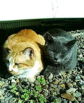 青山には仲のいい猫がいる10